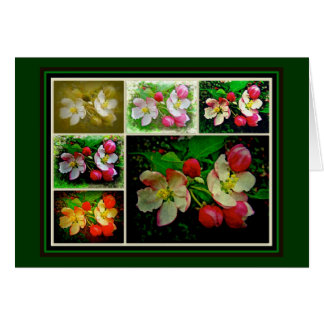 Apple Blossom Collage - Enhanced Digital Photo Greeting Card
