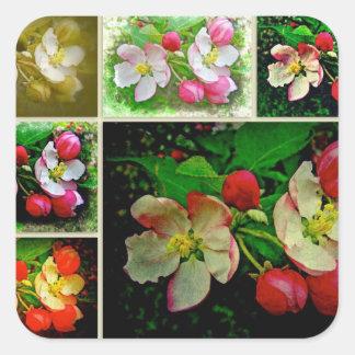 Apple Blossom Collage - Enhanced Digital Photo Square Sticker
