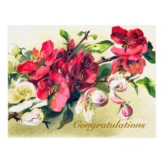 Apple Blossom Congratulations Postcard