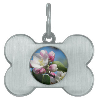 Apple blossom in Spring Pet ID Tag