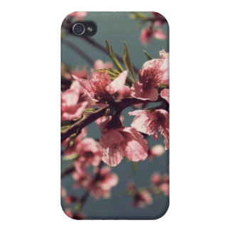 Apple Blossom iPhone Case iPhone 4 Covers