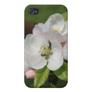 Apple Blossom iPod Case Cases For iPhone 4