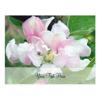 Apple Blossom- Personalize Postcard