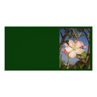 Apple Blossom Personalized Photo Card