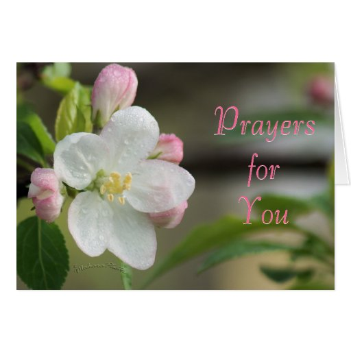 Apple Blossom Prayer card- or any occasion