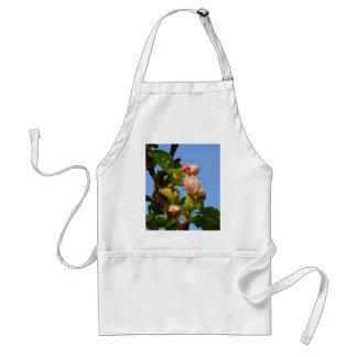 Apple blossom still closed, blue sky standard apron