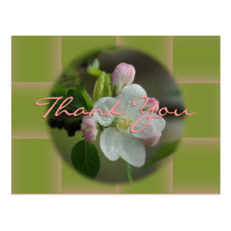 Apple Blossom Thank You or any occasion Postcard