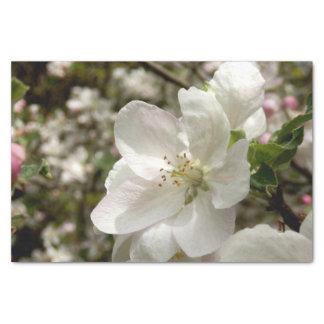 Apple Blossom Tissue Paper