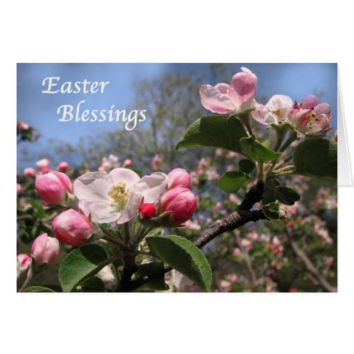 Apple Blossoms at Easter Cards