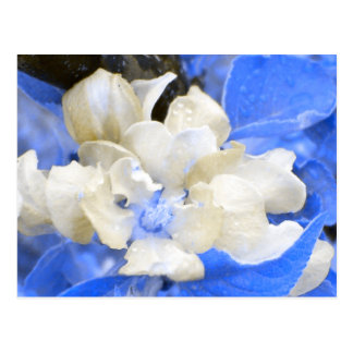 Apple Blossoms- blue and brown Postcard