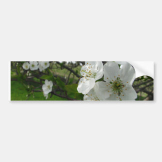 Apple Blossoms Bumper Sticker