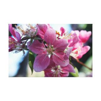 Apple Blossoms Canvas Prints