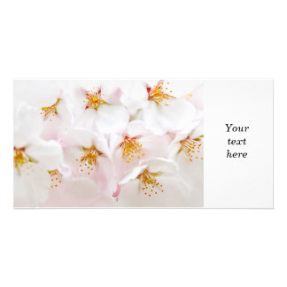 Apple blossoms photo card template