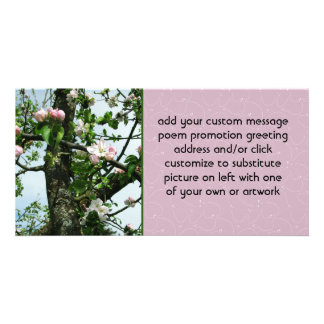 Apple Blossoms Photo Card