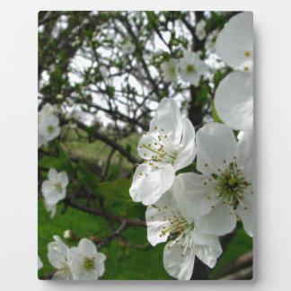Apple Blossoms Plaque