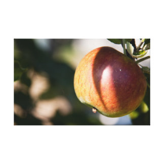 Apple Gallery Wrapped Canvas