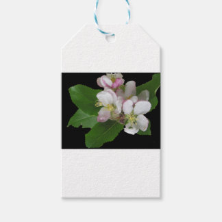 Apple Flower Blossom Gift Tags