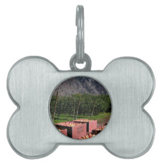Apple Harvest ib southern BC, Canada Pet Name Tag