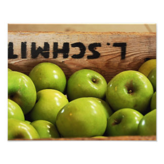 Apple Harvest Photo