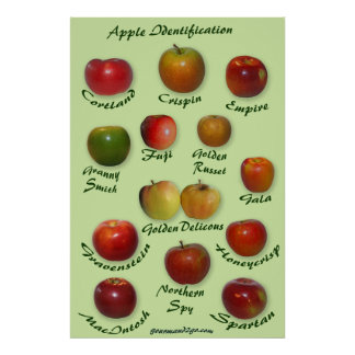 Apple Identification Poster