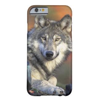 Apple iPhone 6 case of wild wolf portrait photo