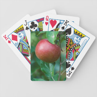 apple on the tree bicycle playing cards