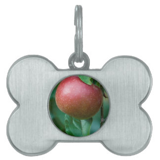 apple on the tree pet ID tag