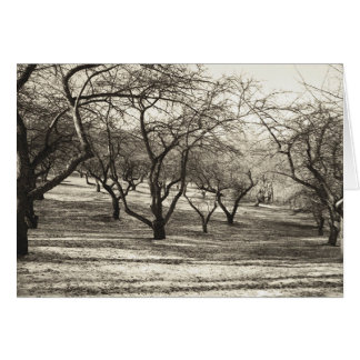 Apple Orchard # 4 Card