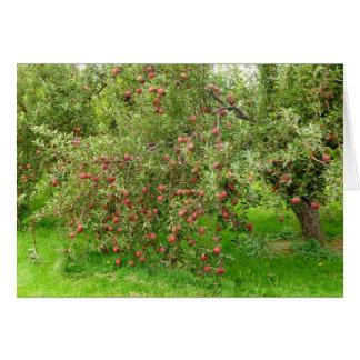 Apple Orchard Card