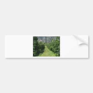 Apple orchard with protection nets bumper sticker