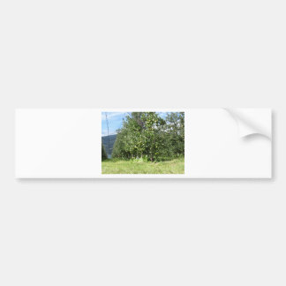 Apple orchard with protection nets bumper stickers