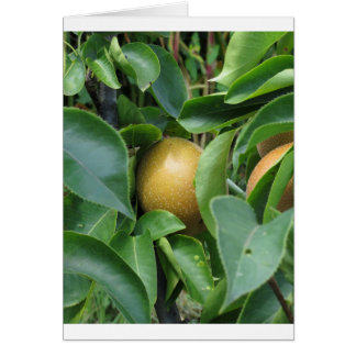 Apple pear on tree branches greeting card