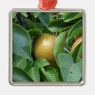 Apple pear on tree branches Silver-Colored square decoration
