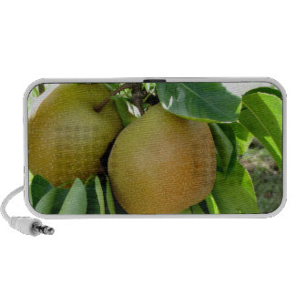 Apple pear on tree branches speaker system