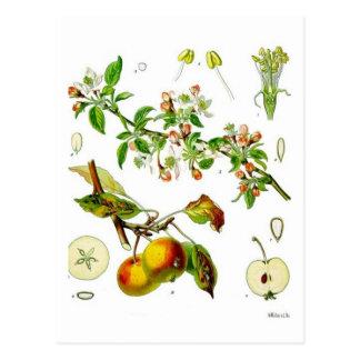 Apple Postcard