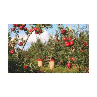 Apple Prints