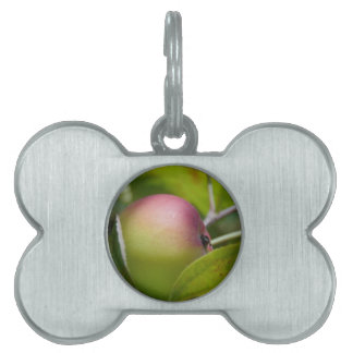 Apple Ripening Pet ID Tag