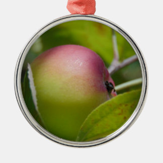 Apple Ripening Silver-Colored Round Decoration