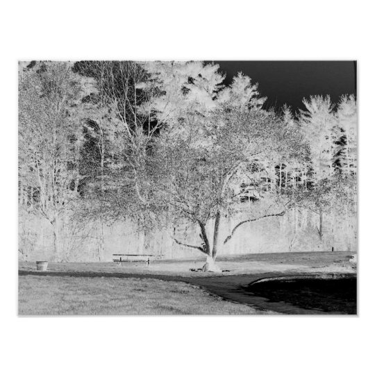 Apple Tree - B&W Poster