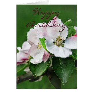Apple Tree Blossom Card