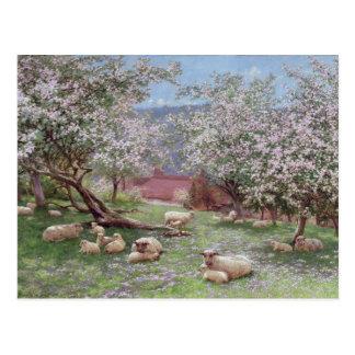 Appleblossom Postcard