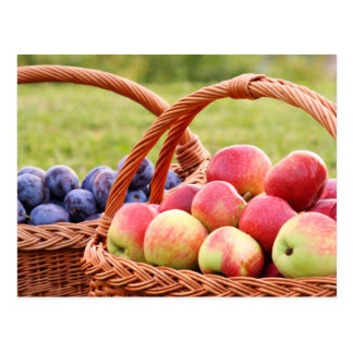 Apples and Plums Postcard