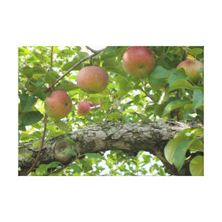 Apples Hanging On The Tree Gallery Wrap Canvas