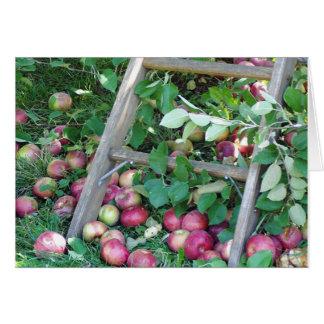 Apples on an Autumn Day Card