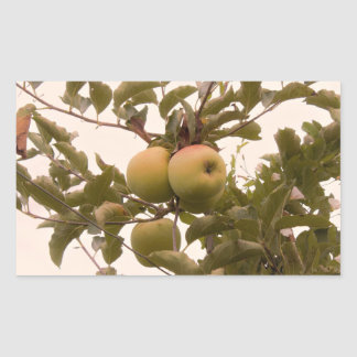 Apples on Apple Tree Rectangular Sticker