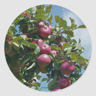 Apples On The Tree Nature Photography Sticker