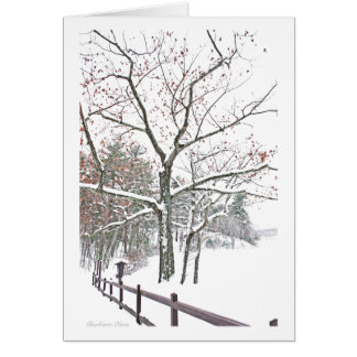 ***Appointments in Nature: Holiday Greeting Card