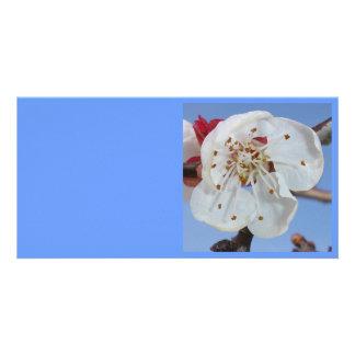 Apricot Blossom Macro Personalized Photo Card