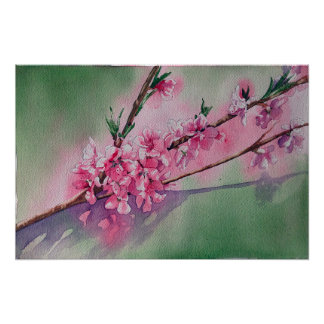 Apricot Blossoms in Spring Poster