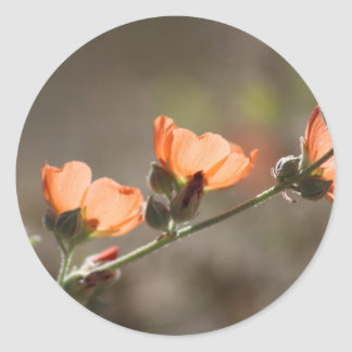 Apricot Mallow Flowers Sticker